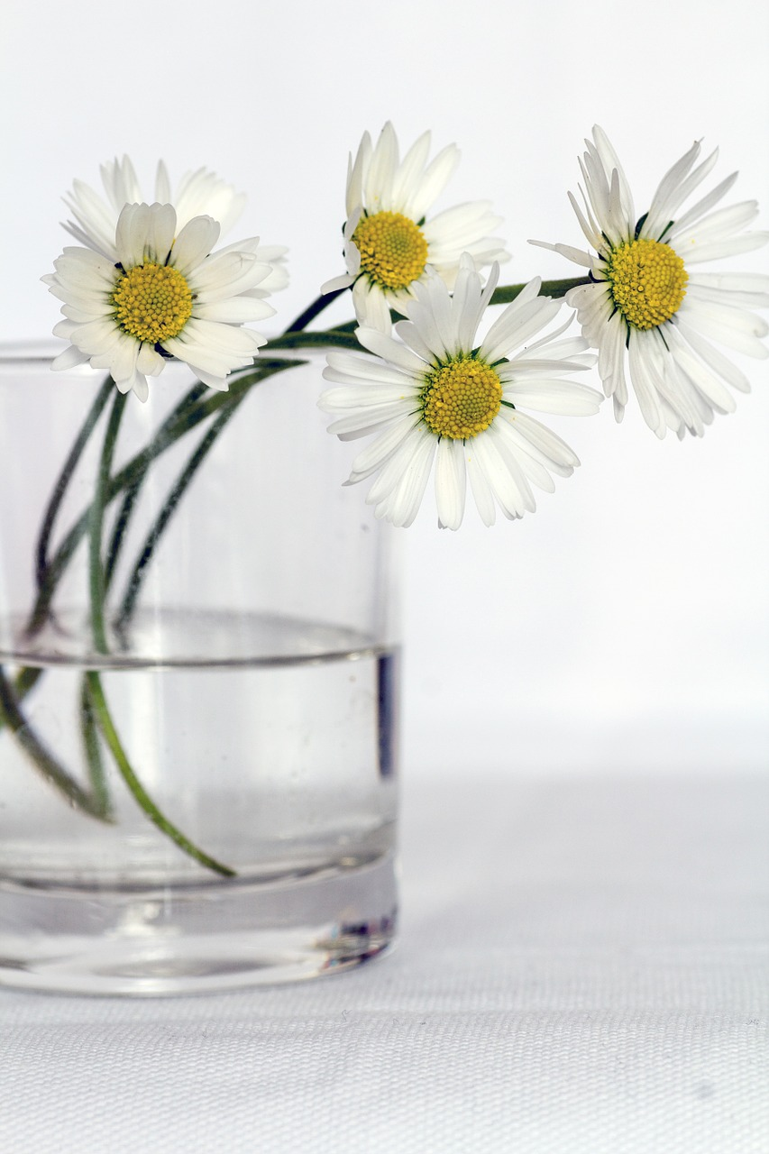 marguerite-vase